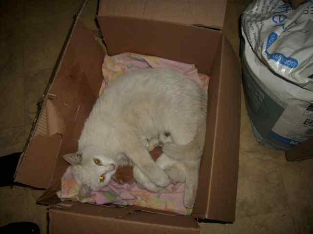 Коробка для кошки для родов своими руками