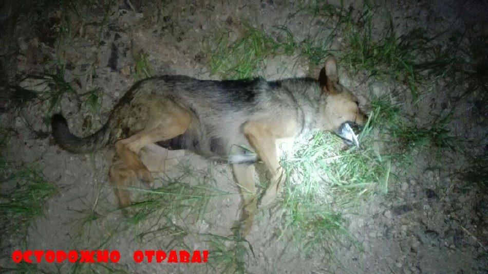 Отрава для волка 142